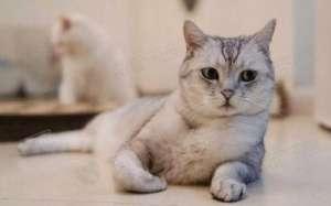 猫咪可以吃鸡蛋吗?